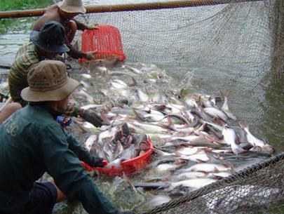 For pangasius industry to develop