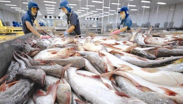 Pangasius exports are receiving good signals from some major markets