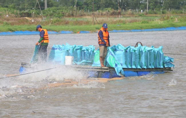 Promote linkages and promote strengths of Pangasius farming in Cuu Long Delta