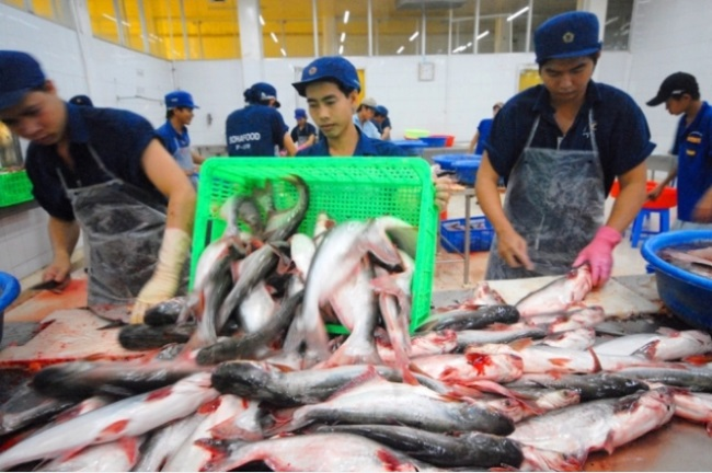 Pangasius has a chance in other markets